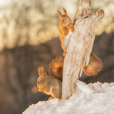 squirrels fire