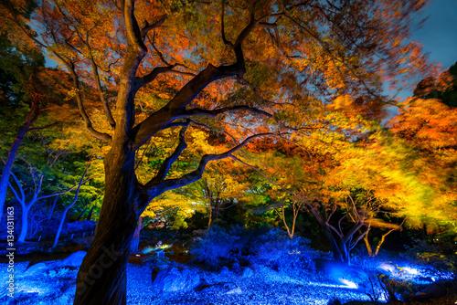 Poster Korakuen Garden Tokyo