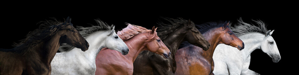 Six horses portraits isolated on a black background
