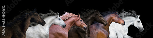 Poster Six horses portraits isolated on a black background