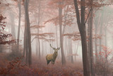 Beautiful image of red deer stag in foggy Autumn colorful forest - 134054101