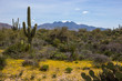 Spring in the Arizona Desert, Horizontal