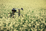 Vintage Bicycle in rural mustard field