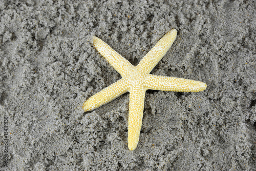 Poster sea star on sand in beach