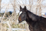 a horse in a pasture in winter