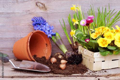 Leinwanddruck Bild Frühlingsblumen pflanzen, anpflanzen, Textraum, Copy space