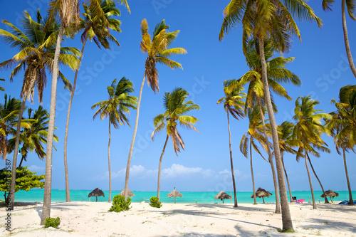 Perfect sand beach with palm trees, Zanzibar, Tanzania