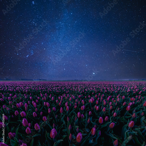 Fotobehang Tulpen Night Landscape with Tulips and Stars