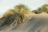 Beautiful Mediterranean sand dunes near Saints-Maries-de-la-mer, France