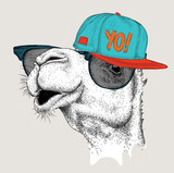 The image of the camel in the glasses and in hip-hop hat. Vector illustration. - 134157528