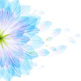 Floral round pattern of blue flower petals - 134180558