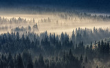 coniferous forest in foggy mountains © Pellinni