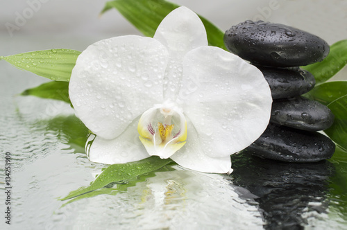Fototapeta na wymiar spa Background - orchids black stones and bamboo on water