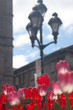 Red, pink and white tulips backlit by the sun with lamppost and a church in the background.  Shallow depth of field. Old Montreal, Montreal, Canada.