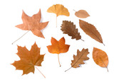 dried leaves group