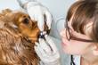 Veterinarian checks teeth to a dog