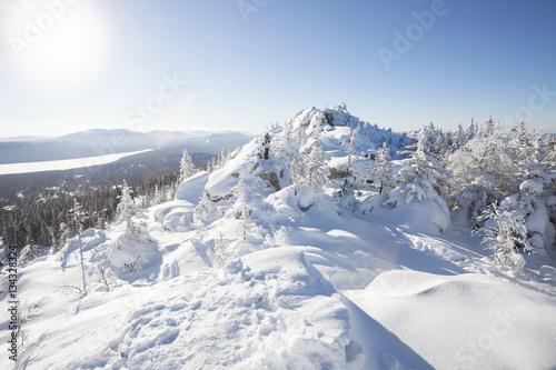 Las pokryty śniegiem