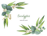 Watercolor vector wreath with green eucalyptus leaves and branches. - 134329721