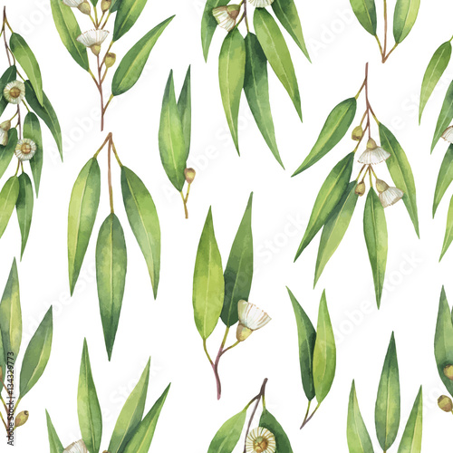 Watercolor vector seamless pattern with eucalyptus leaves and branches. - 134329773