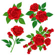 Red rose flower set with buds and green leaves, for Valentine's Day and love designs. Realistic vector illustration isolated on white.