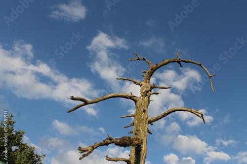 Poster kurumuş ağaç