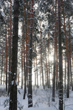The image of winter forest