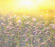 Autumn grass and wildflower background