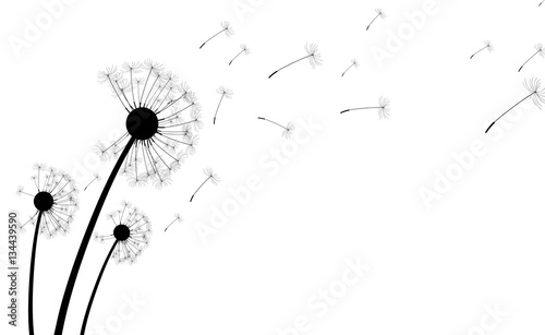 White background with dandelions. - 134439590