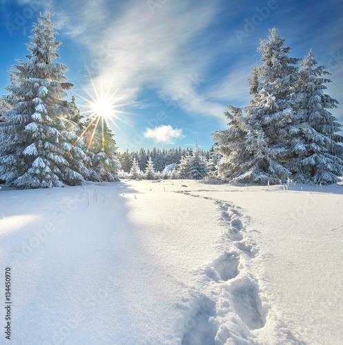 Tuinposter Weg in bos Fußspuren im Tiefschnee