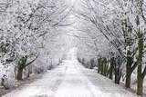 mroźna W zimie dojrzałe drzewa pokryte