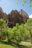 Zion canyon - 1