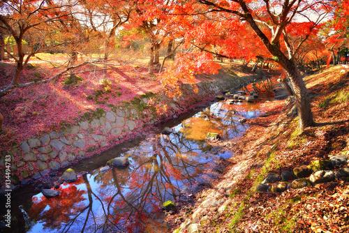 Papiers peints Orange eclat Nara Park in autumn, Japan