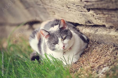 Poster happy cat