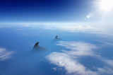 Aerial view of misterious gigant animals swimming in blue ocean