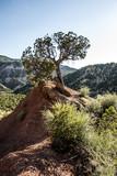 lone juniper tree on hill