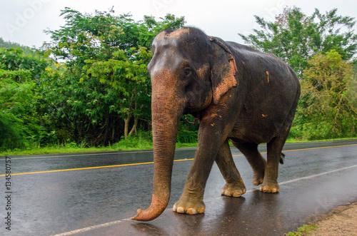 Poster éléphant en promenade sur la route
