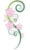 Fototapety Beautiful orchids wall tattoo