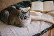 Cat in a cozy interior