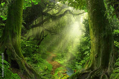 Leinwanddruck Bild Tropical jungle