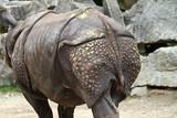 Indisches Panzernashorn - Rhinoceros unicornis - Rhinozeros