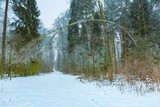 Winter in tranquil forest
