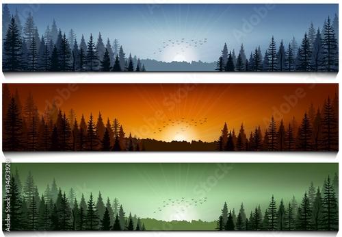 set of forest landscape scenes banners buy photos ap images