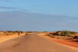 Kangaroos crossing the road