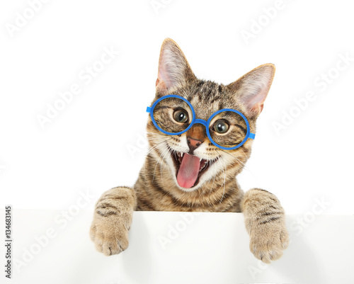 Happy bengal cat wearing glasses looking over a sign