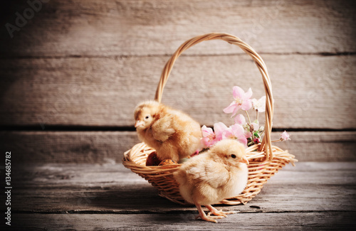 Staande foto Kip chicken with Easter eggs on wooden background