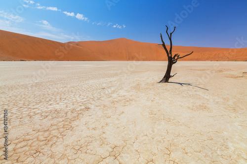 Poster Tunesië The desert landscape