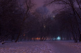 Foggy winter night in the park. Majestic silhouettes of high trees covered in purple mist and orange lights. A downtrodden path leads through the snow to the mysterious and picturesque park
