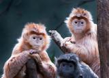 Monkeys - 134740500