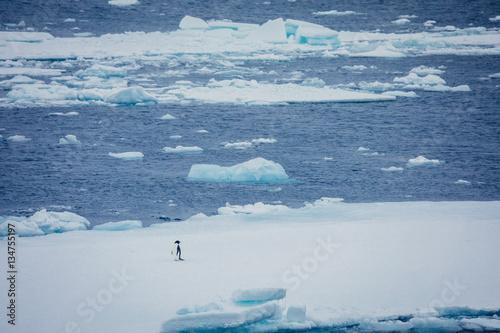Fotobehang Pinguin Pinguine in der Antarktis