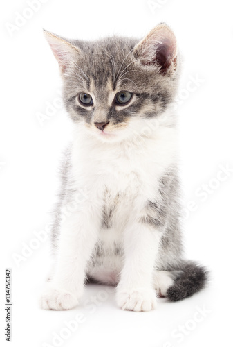 Poster Kitten on white background.
